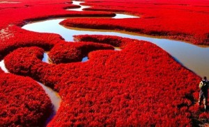 Red-Beach-China-Natures-Mesmerising-Beauty
