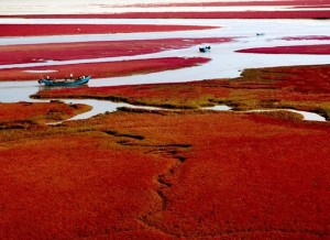 Red-Beach-Panjin-Liaoning-Province