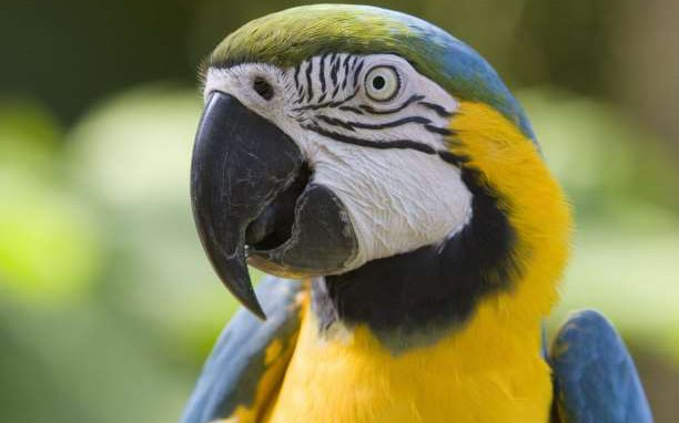parrot_head-612x382