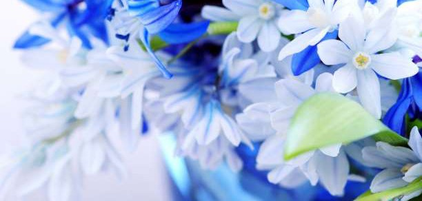 White-Blue-Flowers-flowers-33698267-1440-900-612x292