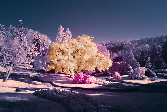 beautifulcoloursinfraredphotography1