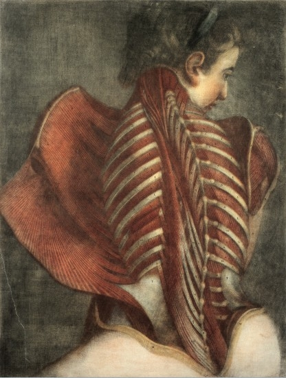 L0019727 Muscles of the back: partial dissection of a seated woman, Credit: Wellcome Library, London. Wellcome Images images@wellcome.ac.uk http://wellcomeimages.org Muscles of the back in a female Mezzotint 1746 By: Gautier Dagotyafter: M. DuverneyPublished: 1745/1746] Copyrighted work available under Creative Commons by-nc 2.0 UK, see http://wellcomeimages.org/indexplus/page/Prices.html