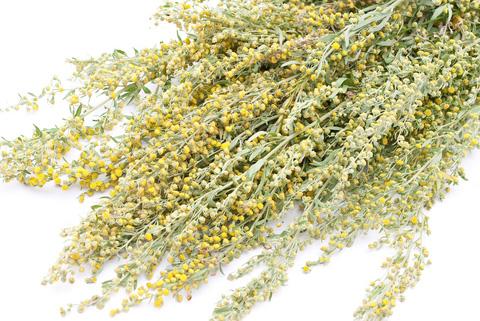 Wormwood-Artemisia-Absinthium-tot