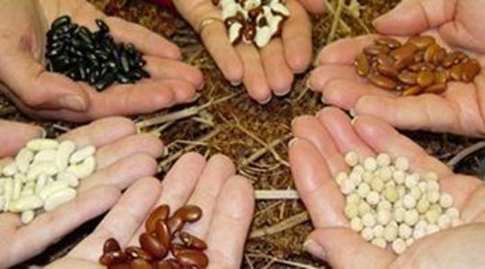 Οι σπόροι emeis