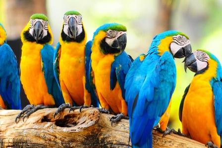 papagalos-mimisi-123194