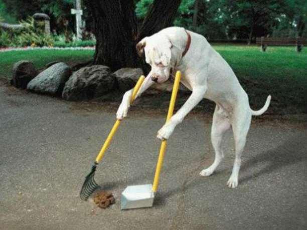 σκύλος-υπακοή