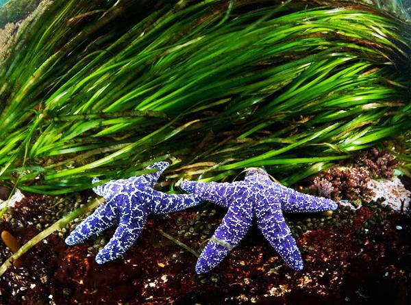 starfishbest