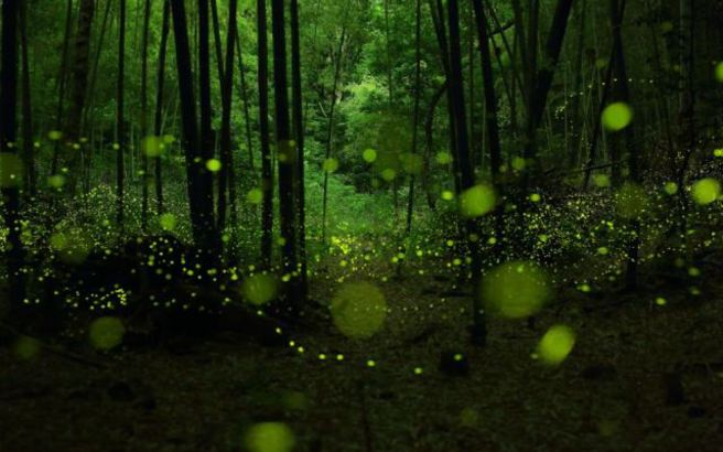 fireflies3.medium