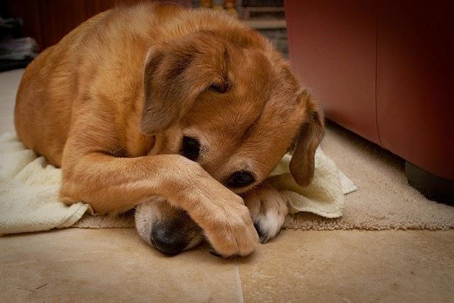 bad-dog-breath