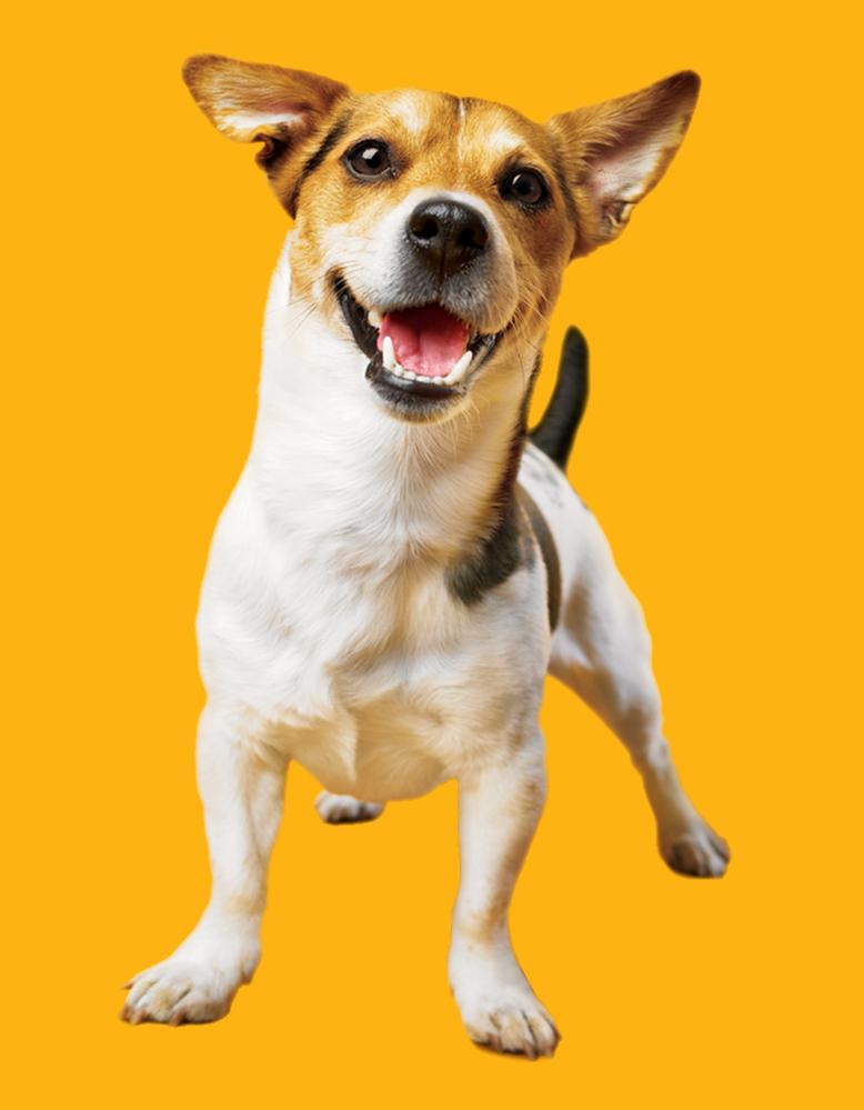 emeis dog1