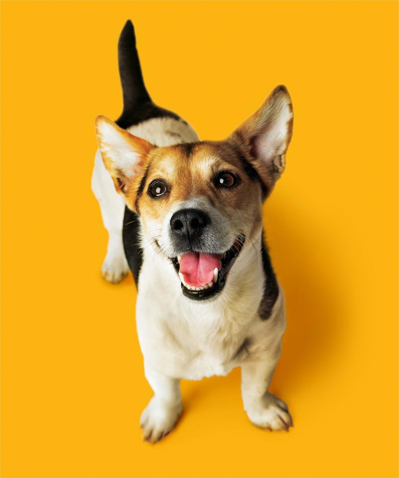 emeis  dog2 (1)